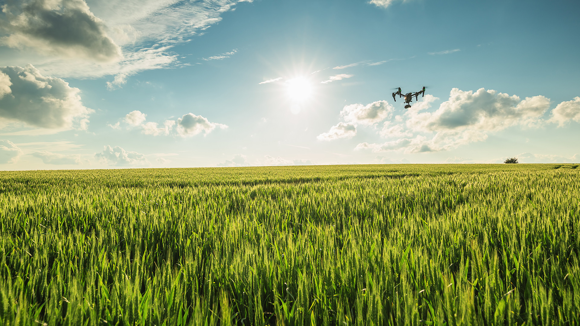 bayer cereals drone flying above field