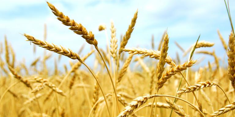 bayer cereals header image